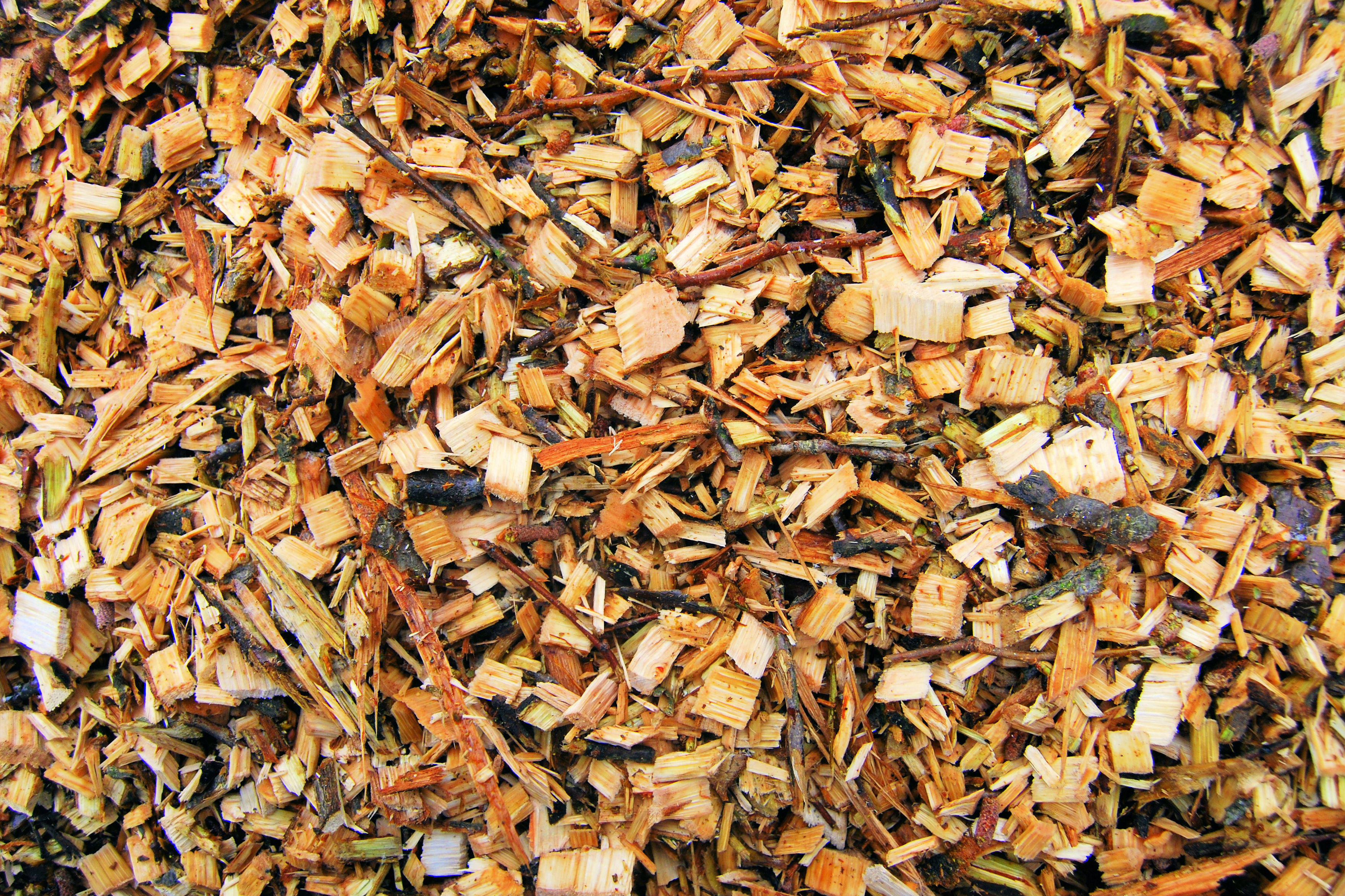 Biomass Wood Chips ~ Bigstock wood chips for a biomass combu envirovid